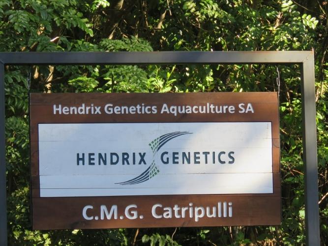 Hendrix Genetics invierte US$ 9 millones en nuevo centro de mejoramiento genético de ovas