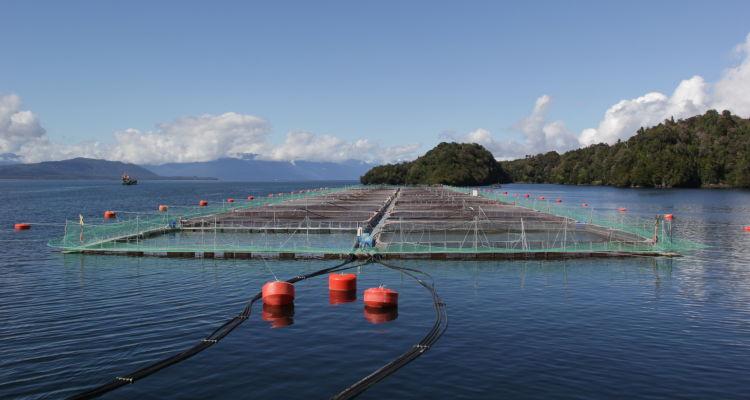 Cambio de paradigma en la acuicultura