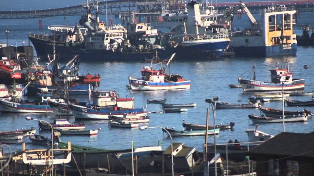 Sector pesquero abre fuerte competencia en inédita licitación de cuotas de jurel