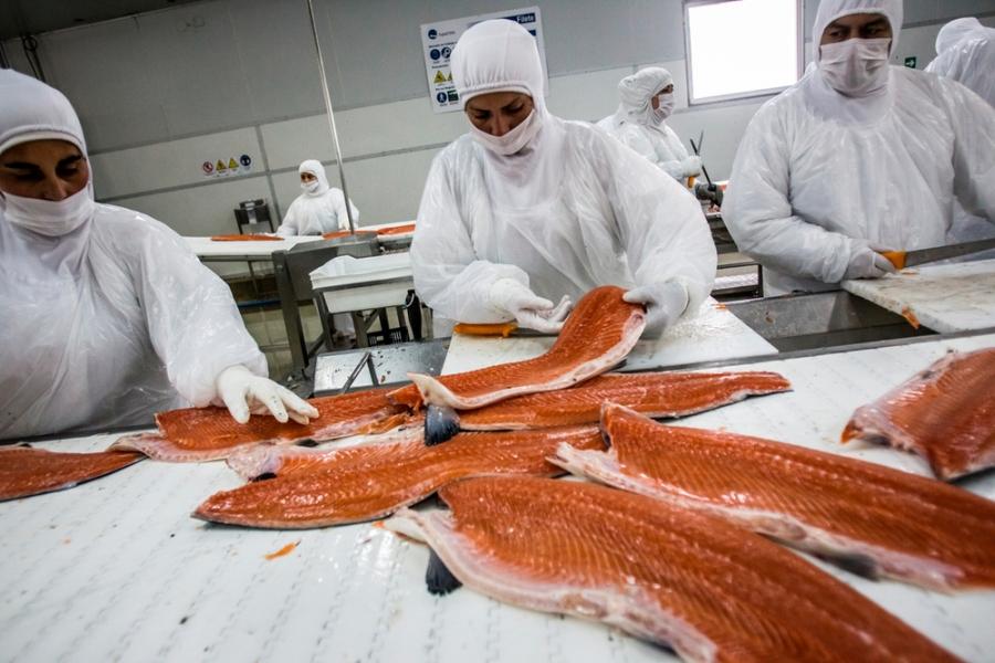Envíos de salmón suben 28% por un mejor precio ante menor producción