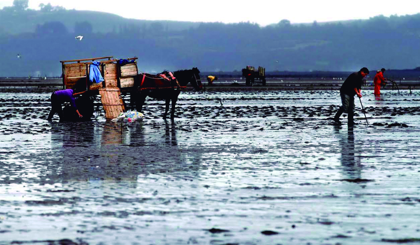 Los nuevos programas de apoyo  al cultivo de algas para pescadores artesanales y acuicultores  de pequeña escala