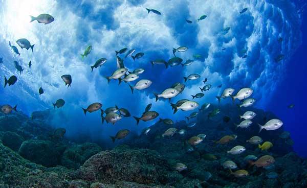 Científicos alertan de rápido deterioro de ecosistemas marinos
