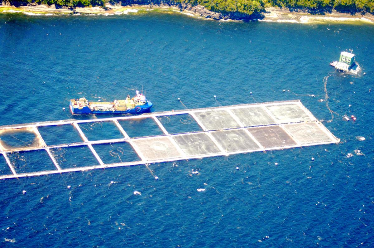 Sernapesca Aysén realiza controles aéreos y marítimos ante posibles efectos de FAN en la zona