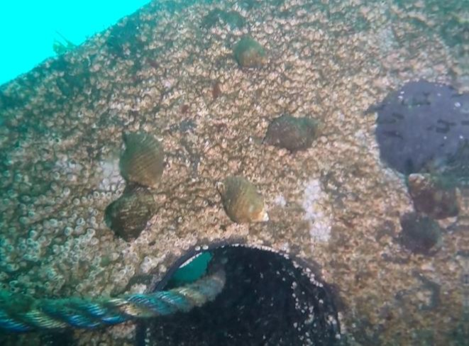 Arrecifes y nichos artificiales para incrementar poblaciones y proteger especies marinas