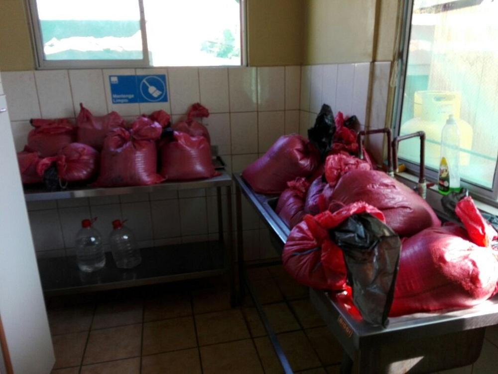 Denuncia ciudadana permitió incautar 280 kilos de pulpo en veda que iba a ser vendido en Coquimbo