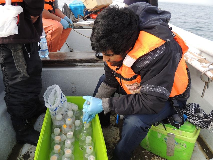 Publican investigación sobre las implicancias de pesticidas contra el cáligus en revista Aquaculture
