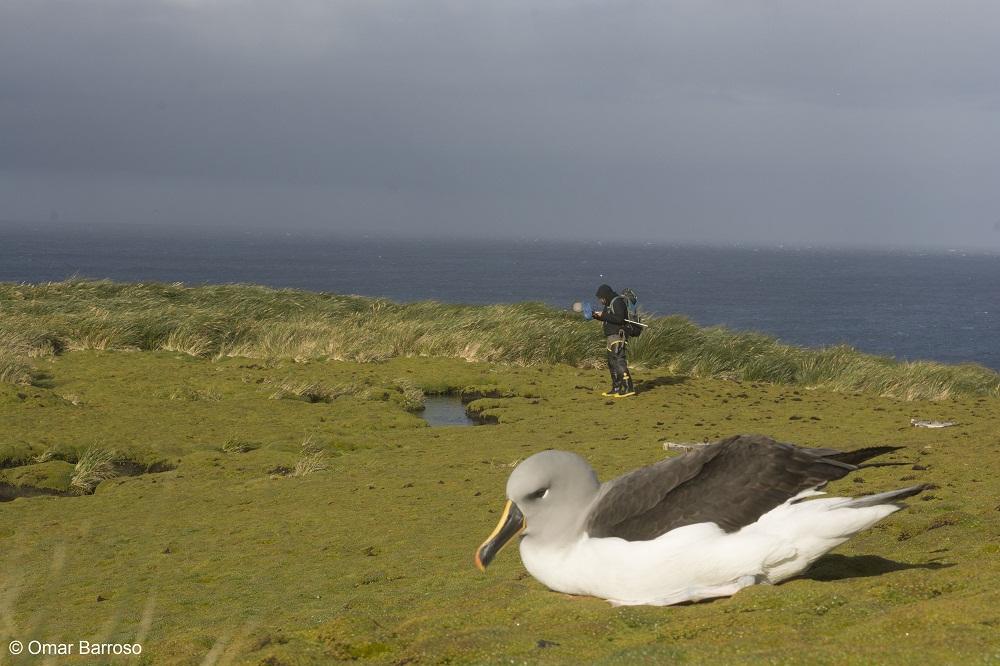Chile establece el parque marino más austral de América