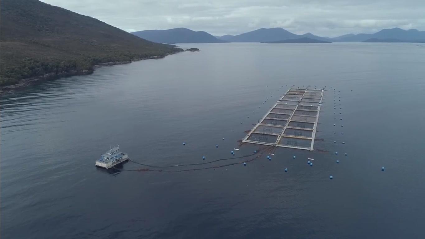Centro Midhurst de Blumar: primero en cultivar salmones sin antibióticos en la región de Aysén