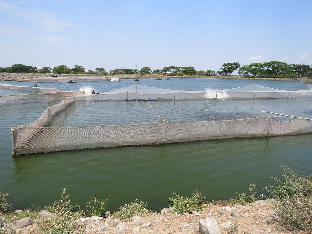 Finca Madre, el mayor centro de producción de tilapia de Aqua Corporación en Costa Rica