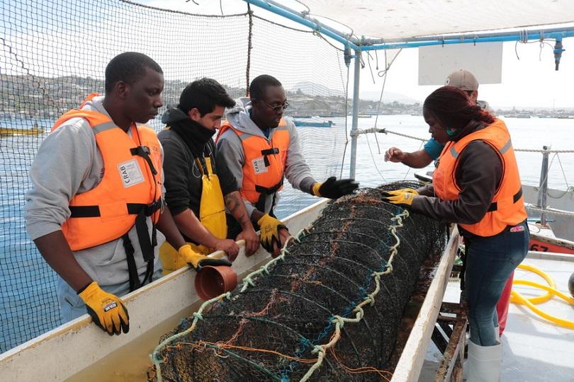 Profesionales y técnicos de África conocen métodos de cultivo del ostión del norte en Tongoy