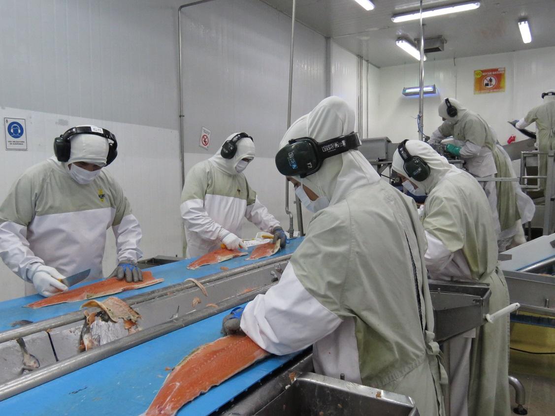 Innovadora prenda técnica permite reducir el uso de plástico en plantas de proceso de salmón