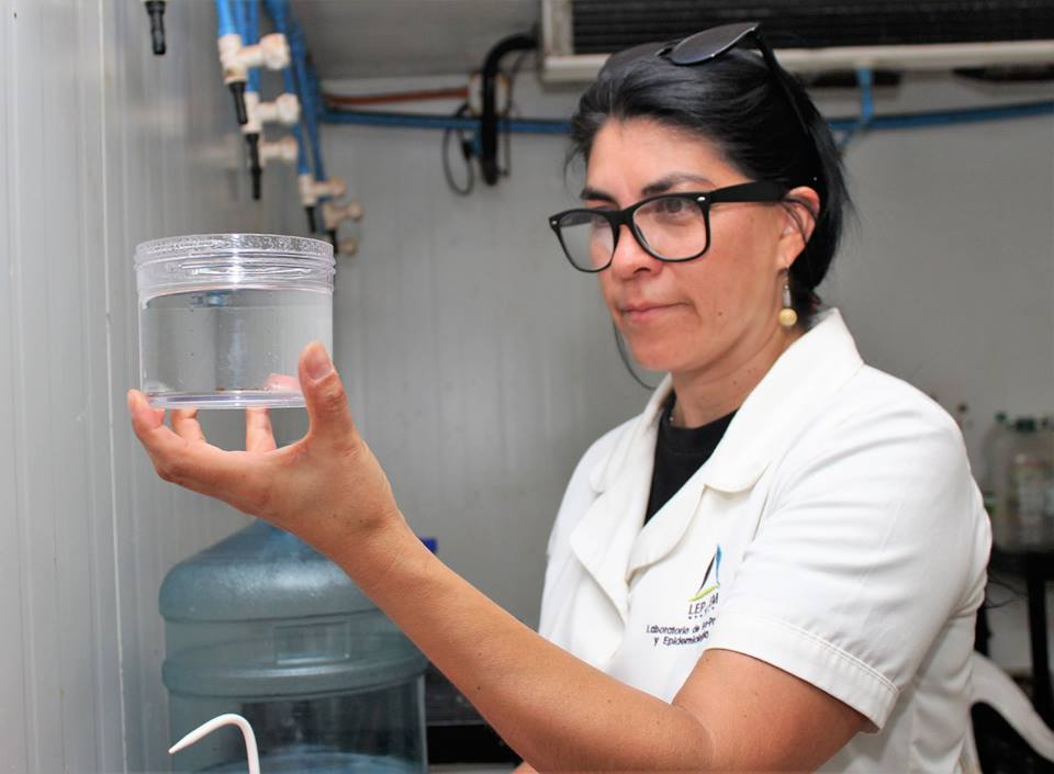 Control de parasitosis en cultivo de dorado chileno
