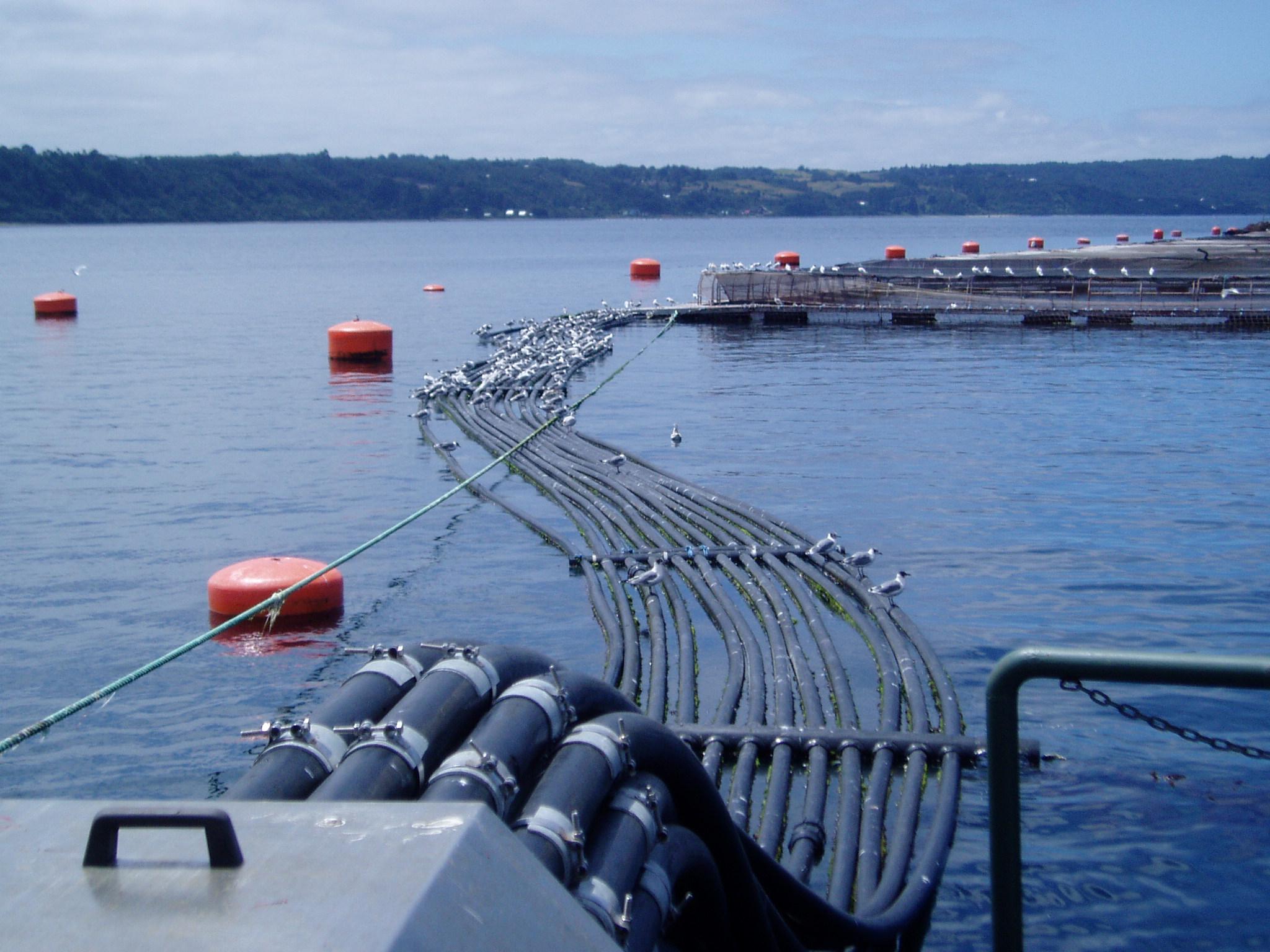 La importancia de la innovación en sistemas automáticos de alimentación para peces