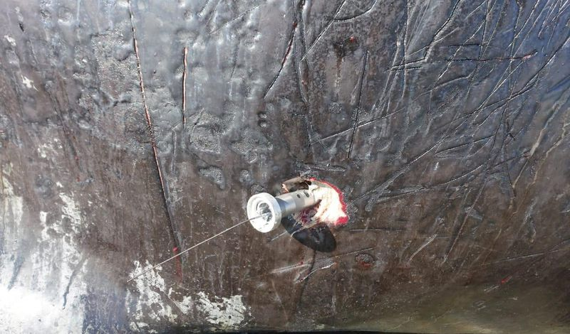 Encuentran ballena varada con dispositivo de rastreo