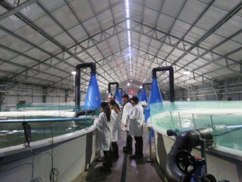 Conociendo la producción la fase de agua dulce de Mowi Chile en Aysén