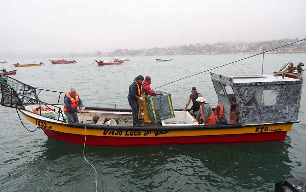 Pescadores de Los Vilos apuestan por cultivar congrios colorados