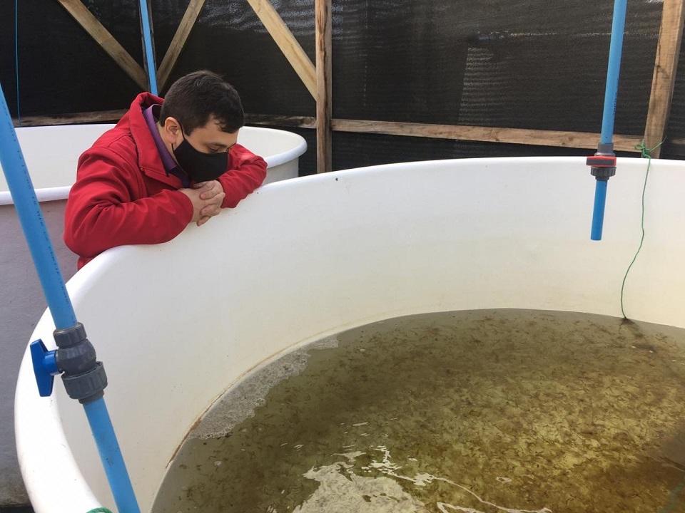 Pescadores de caleta Cholgo reciben 40 mil plantas de huiro flotador