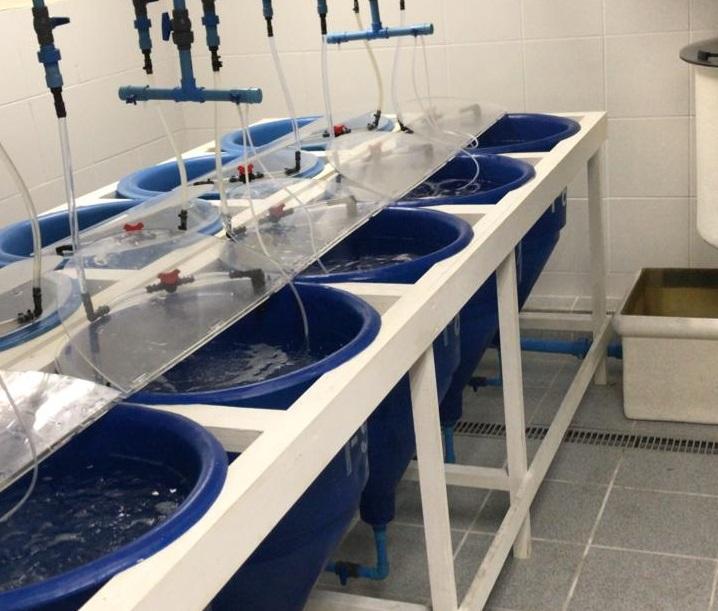 Los desafíos clave para la salud de los salmónidos en agua dulce